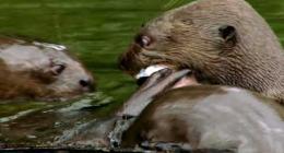 Il valore della biodiversità - Perù
